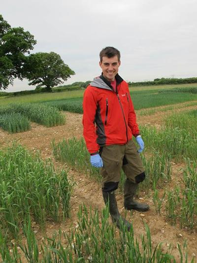 Field sampling of a diverse wheat germplasm at Rothamsted Research to investigate wheat cultivars with interesting zinc characteristics.