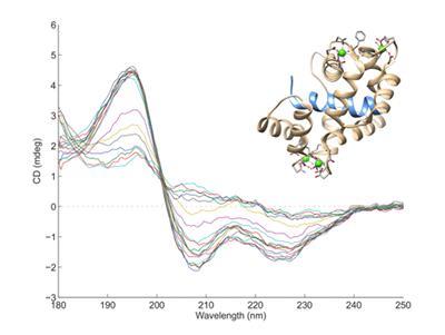 CD spectra provide information on molecular conformations