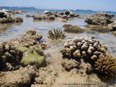 Coral Reef Ecosystem, NE Madagascar