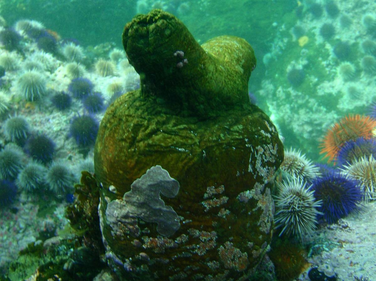 Masters MSc in Oceanography | Ocean and Earth Science