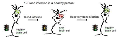Blood infection in healthy person
