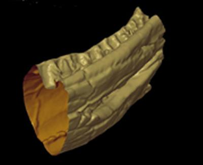 Created in the new 'µ-VIS' Centre for Computed Tomography