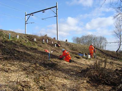 Monitoring of the effects of mature trees on the serviceability of railway earthworks
