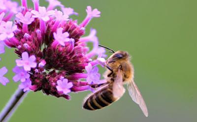 Pollinators provide an important ecosystem service