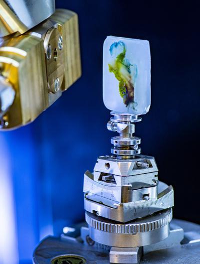 3D X-ray Histology
