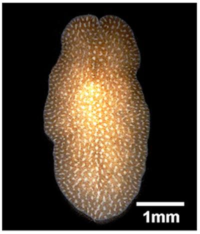 Daylight image isolated worm