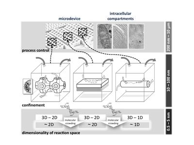 Schematic showing links between molecular crowding, reduced dimensionality and nanostructured phases.