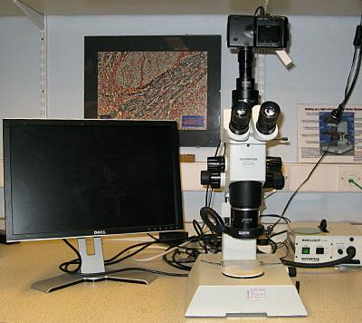 Olympus SZX9 Dissecting Photomicroscope
