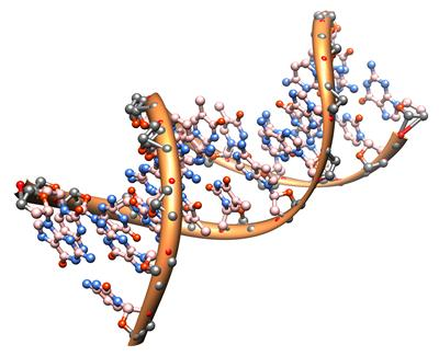 gene mapping to reduce risk