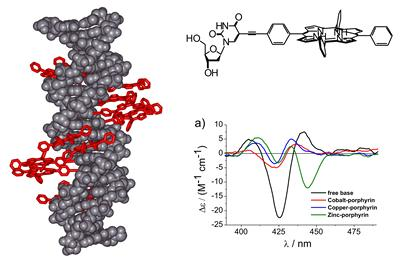 Modelled structure of a porphyrin zipper DNA wire with general nucleoside building block, and CD spectra demonstrating the differences in induced CD signals based on different metalation states.
