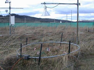 Research site at TasFACE