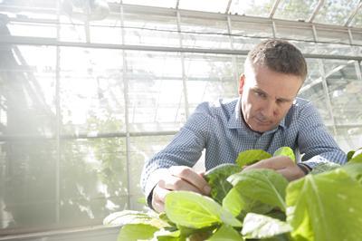 an innovative electrostatic technology providing environmentally friendly pest control