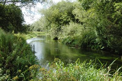 Study site on the River Lambourn (UK)