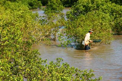 Mangroves affect livelihoods