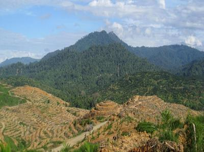 Sabah, Borneo where tropical forest has been cleared to plant oil palm