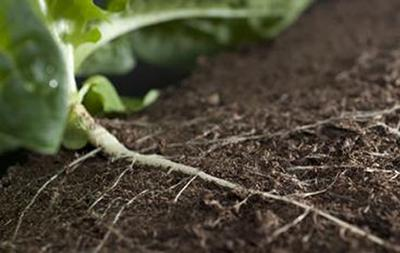 Soil and plant roots