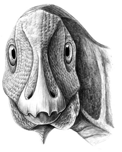 Telmatosaurus reconstruction.