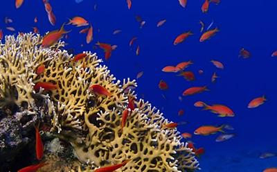 Complex ecosystems & coral reefs threatened by global change
