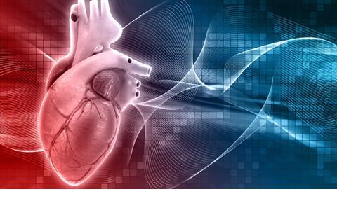 BSc Cardiac Physiology