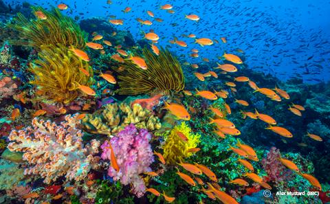 Brightly coloured coral reef