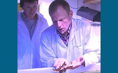 Professor Joerg Wiedenmann