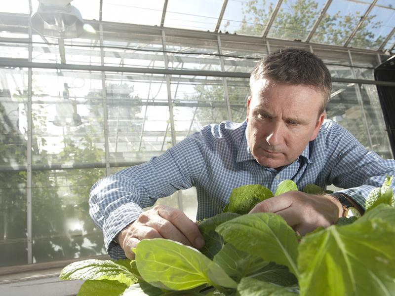 Professor Guy Poppy from Biological Sciences working the in the greenhouse at Boldrewood for the food security project