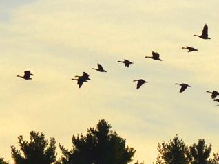 bird flickr ashokboghani