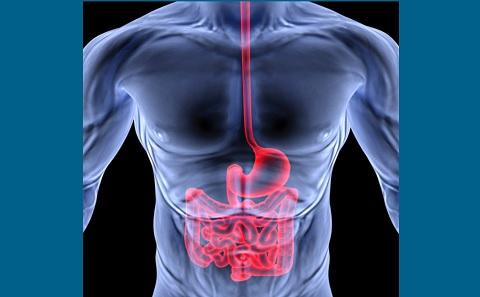 Cancers of the gastrointestinal tract