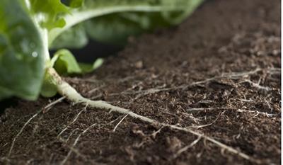 AMR in soil