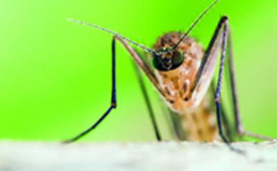 Malaria movements across continents