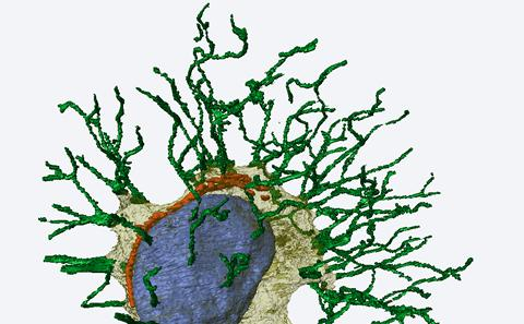 TCES osteocyte