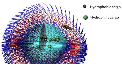 Schematic polymersome nanoparticle