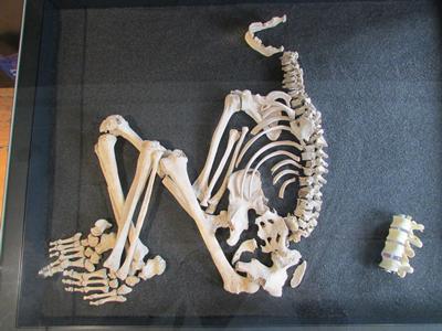 Iron Age Bones