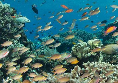 Raja Indonesia Coral Reef