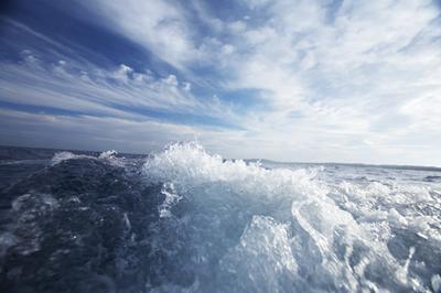 Water is one part of the WEF nexus