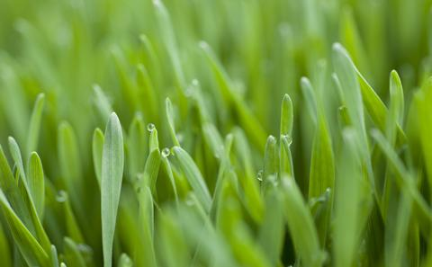 Close up image of blades of grass