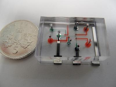 Scientists develop worm EEG