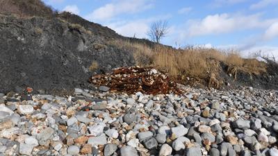Environmental risks of landfill