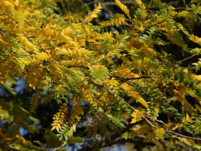 Yellow and green leaves on a branch