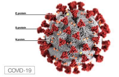 Covid M protein image
