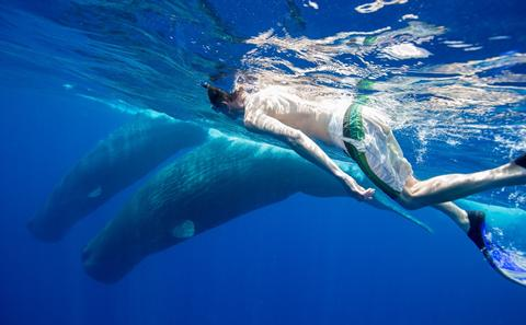 Philip Hoare swimming with whales