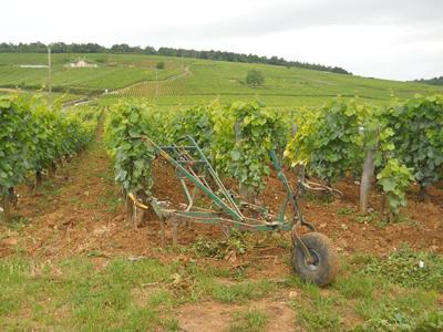 Cart in Burgundy Vineyards