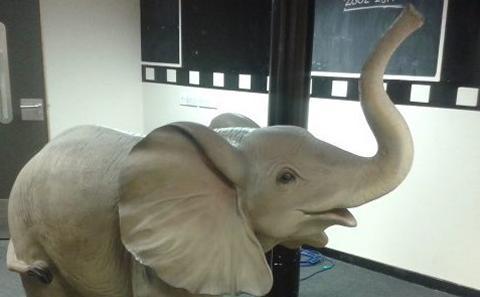 Elephant (courtesy SUSU)