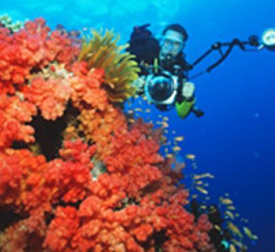 Galapagos coral
