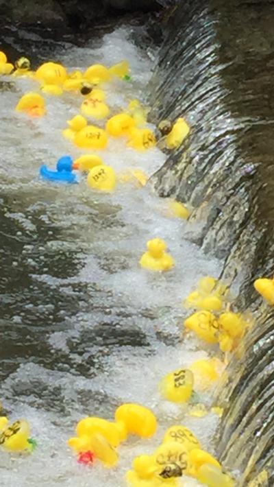 Lyme Regis duck race
