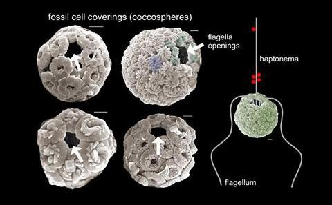 microscopic-image-of-fossil-cell
