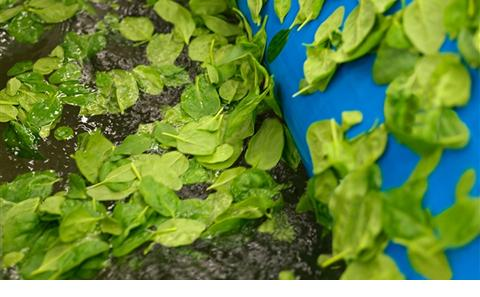 An image of washing spinach