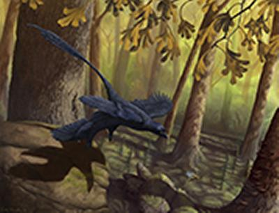 Aerodynamic feathered dinosaur Micr