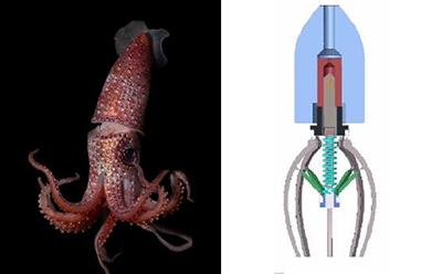 Robot inspired by squid