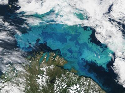 Algae bloom in the Barents Sea